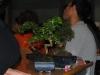 bonsai_09
