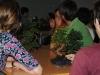bonsai_11