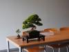 bonsai_22